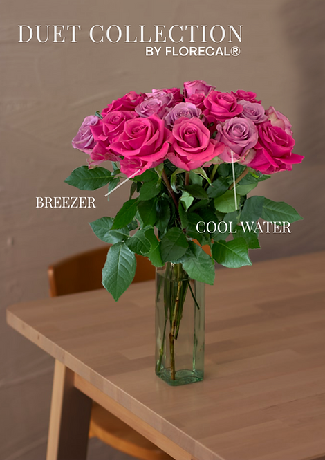 Duet Cool Water & Breezer