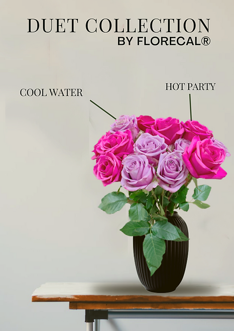 Duet Hot Party & Cool Water