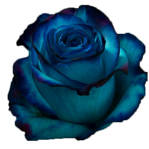 Blue Lace Sweetness