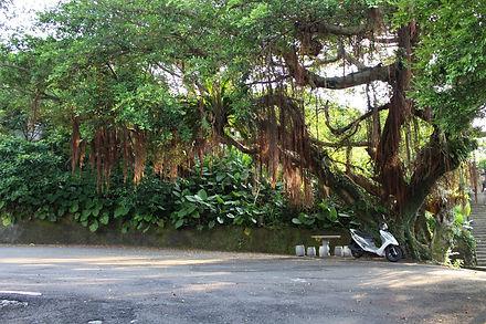 大樹下2.jpg