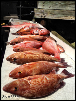 Snapper with Fishprocharters.com