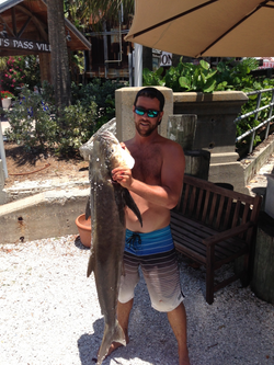 Cobia | Fishprocharters.com