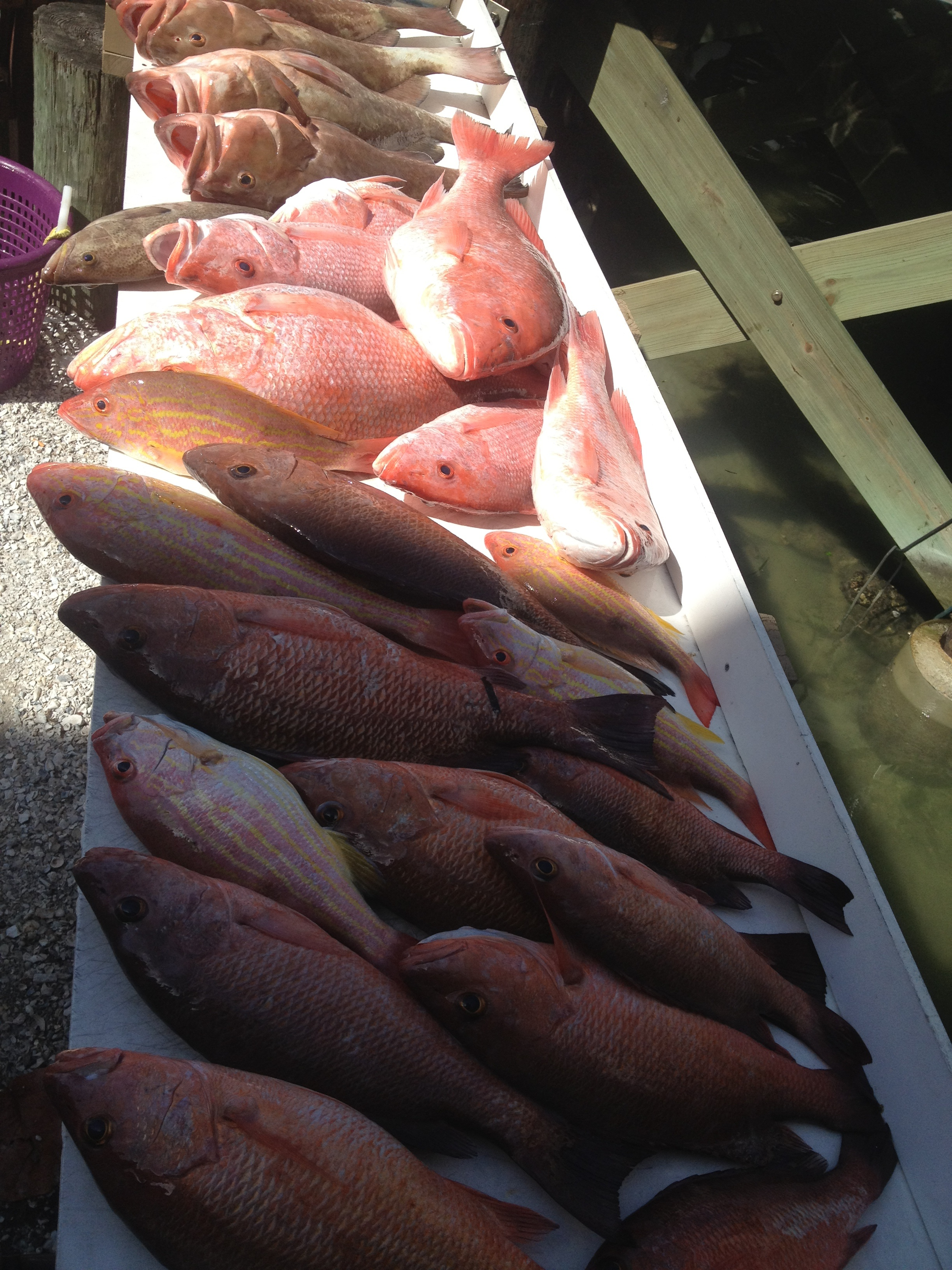 Grouper, Snapper, deep sea fishing