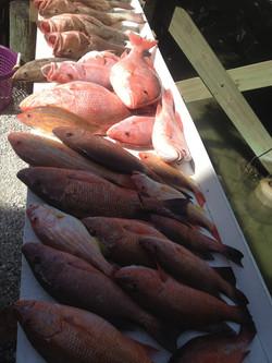 Grouper, Snapper, deep sea fishing