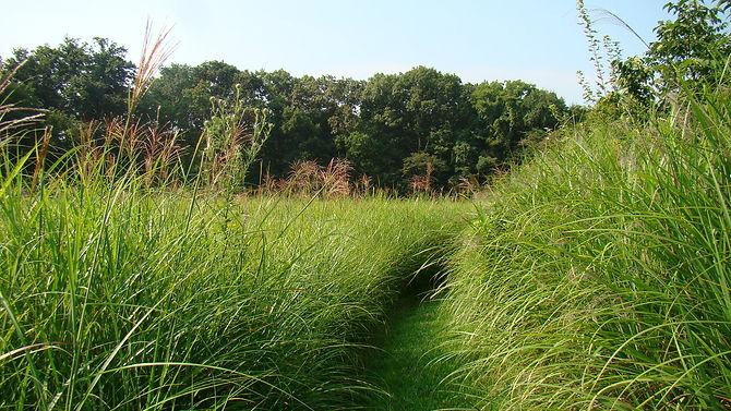 path in meadow.JPG
