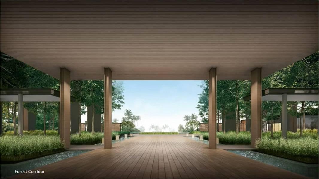 Clavon Forest Corridor.jpg