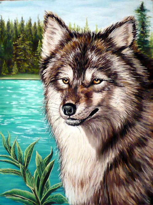 Alberta Timber Wolf