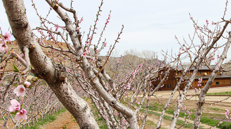 Orchard-river-view-blossoms-2019.jpg