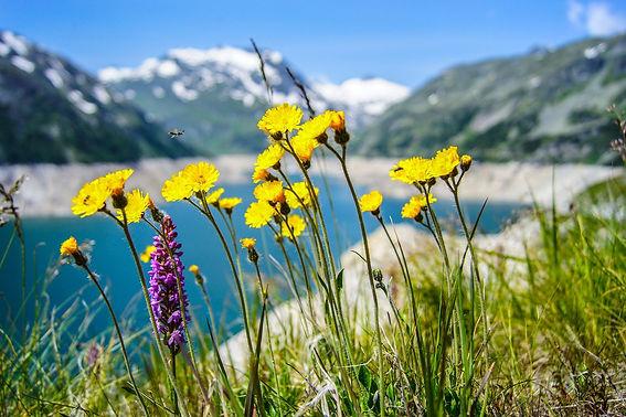 flowers-1190773_1920.jpg
