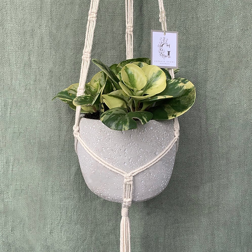 Square knot Macrame plant hanger