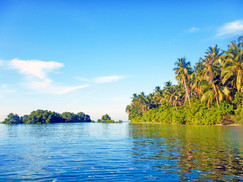 High Tide at Punta Dolores showcases the popular landmark of mangroves, hedges, and Coconuts