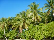 Punta Dolores Beach Hedges