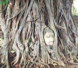 Ayutthaya arbre buddha