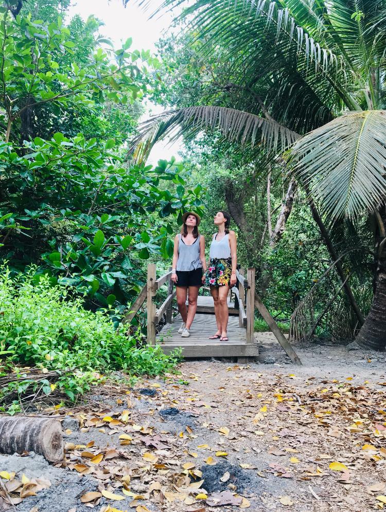 La jungle du parc Tayrona, Colombie