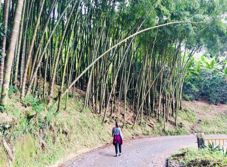 Sur les sentiers battus de Salento, Colombie
