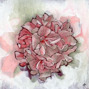 Pelargonium Mårbacka