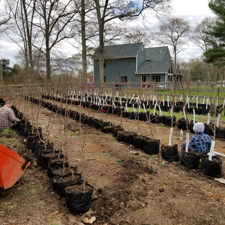 How to Plant an Orchard: Part 1