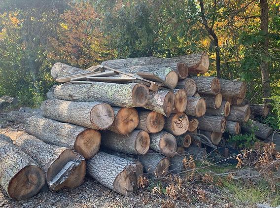 Oak logs ready to mill