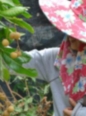 Garden Longan.jpg
