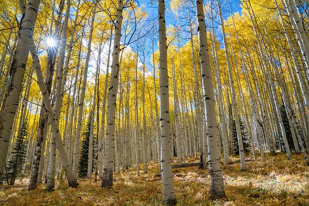 trees_for_wix.jpg