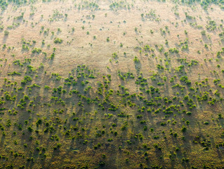 Africa's Great Green Wall - combating climate change and desertification