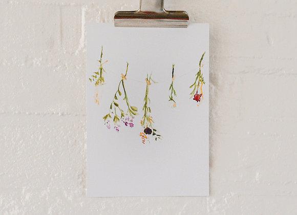 Dried flowers | postcard