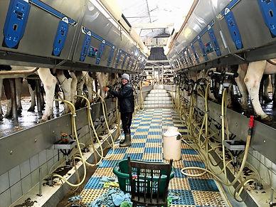 Milking duties