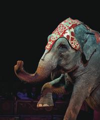 Sobre Animales, Circos y Otros Demonios
