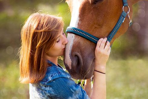 horse-3385776_1920.jpg