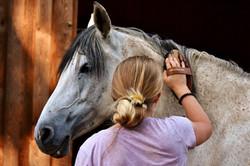 horse-love-2818959_1920.jpg