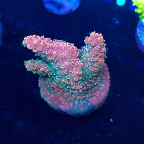 Reef Raft USA Rainbow Loom