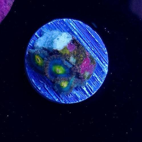 World Wide Corals AOI