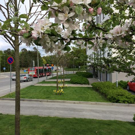 Bostadsgård Farsta