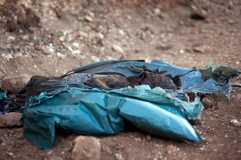 Hundekampf Teneriffa toter Hund Quelle Foto Fran Pallero diariode avisos