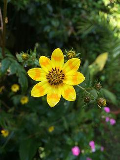 flower-945780_1920.jpg