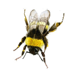 Bumble Bee_Square