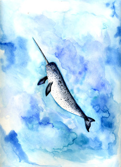 Narwhal492