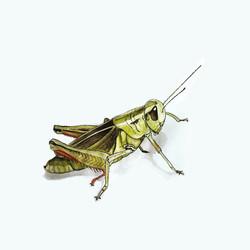 TiaLambert_Sketchbook_Grasshopper_v1