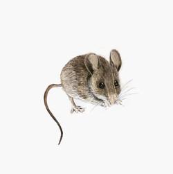 TiaLambert_Sketchbook_Mouse_v1