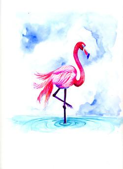 FlamingoBlue491