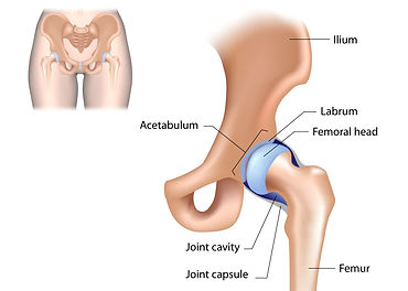 Alexander Dodds Orthopaedic Surgeon Gloucestershire, Knee and Hip Specialist Orthopaedic Surgeon