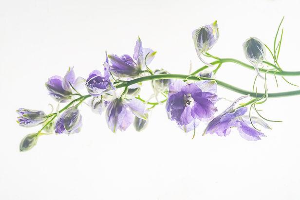 botanicalPaulettePhlipot_PPP8084.jpg