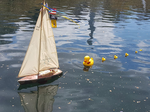 Toy Sail boat pulling a line of rubber ducklings