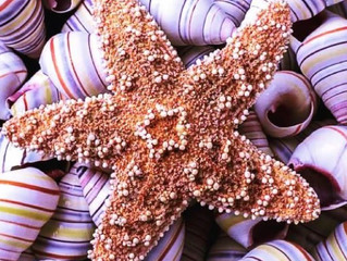 Stars are born among a sea of Shells, Let you be the Odd one out.
