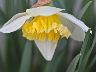 E' Primavera! A Pasqua fai il pieno di vibrazioni...