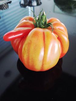 Dodgy Tomato
