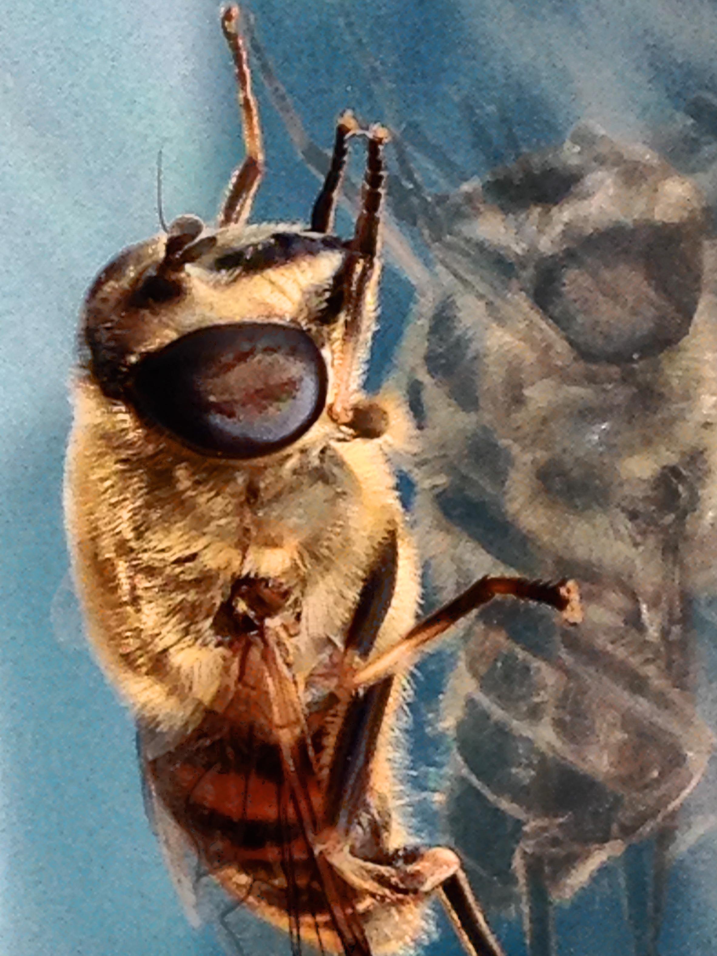 Bee My Friend 2