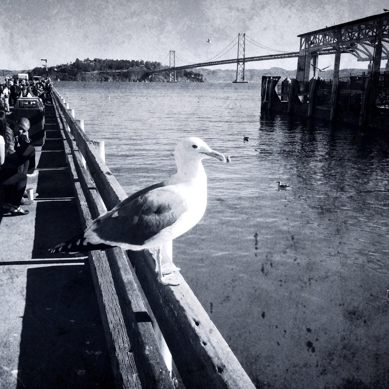 The Pier San Fran