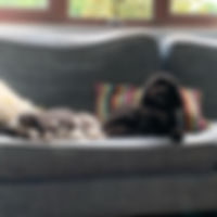 barlie and ziva sofa.jpg