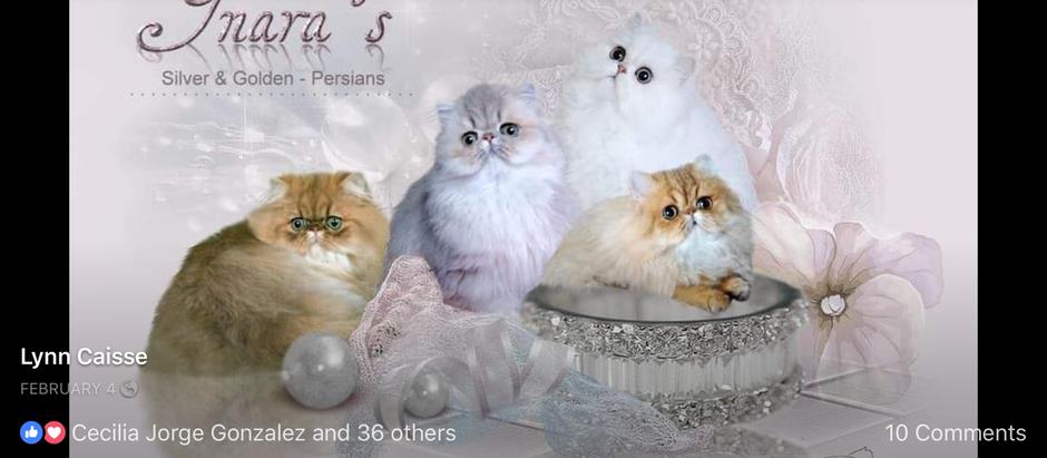 """Itemized list for new kitten families."""
